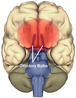 Olfactory problems after brain injury.